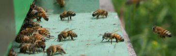 Recensement des ruchers