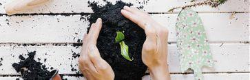 Semaine du développement durable : rendez-vous aux jardins !