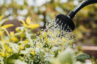 La sécheresse s'intensifie, 8 bassins désormais concernés par des restrictions dans le département.