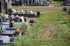 Au cimetière, la végétation s'installe