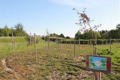 Le site Un enfant, un arbre au bout de la rue des Papillons